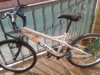 "Mountain bike - cup""s basic  324.10"